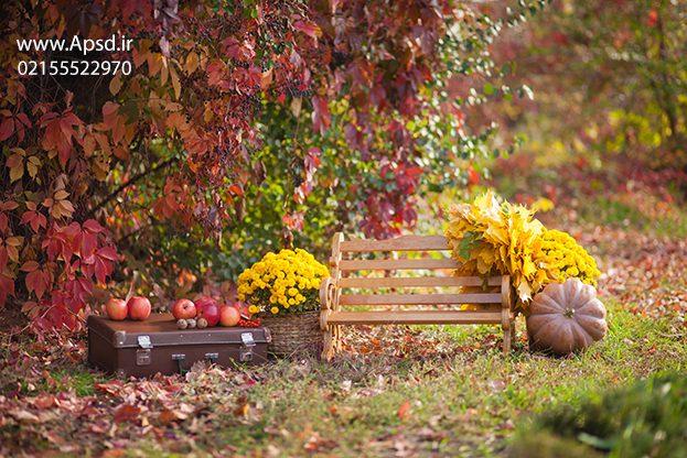 دانلود بکگراند پاییز با کیفیت بالا